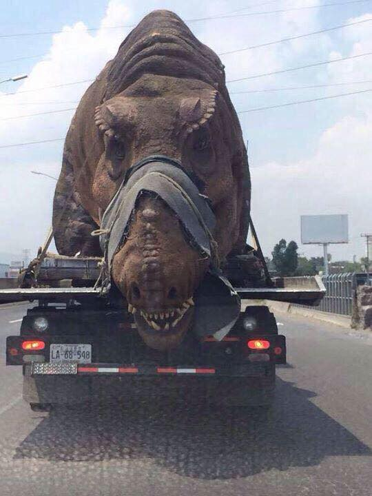 Dinosaur Tied on The Truck Bed