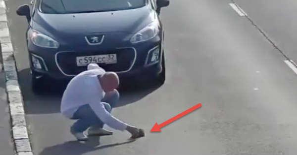 Cat Saver Stops Traffic Russia Save Kitten 2