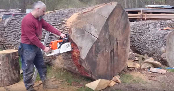 Powerful Stihl MS 880 Magnum Chainsaw Vs Massive Oak Log 2