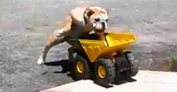 Cute Bulldog Jumping Toy Truck 1