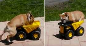 Cute Bulldog Jumping Toy Truck 2