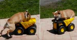 Cute Bulldog Jumping Toy Truck 2