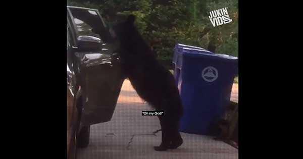 intelligent bear car open door 2