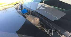 Mourning Dove Built Nest Inside Police Car 2