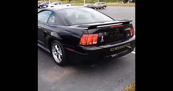 Mustang Cobra Sound 1