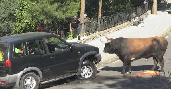Gore Wheel Drive Bulls Festival 1