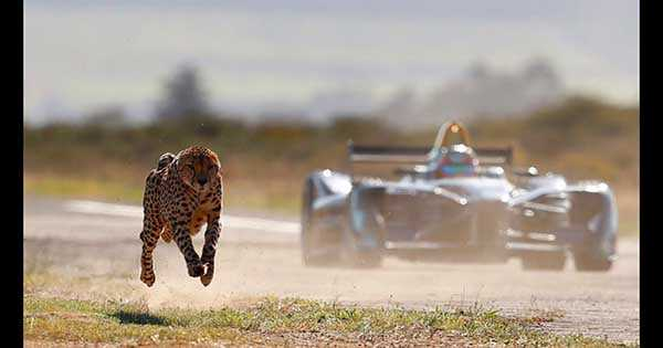 Cheetah vs Formula E Race Car 1